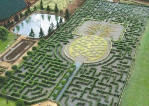 Dole-Pineapple-Maze-credit-Dole-Plantation