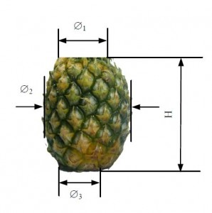 Scientific Pineapple